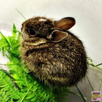 {Wordless Wednesday} Baby Bunny