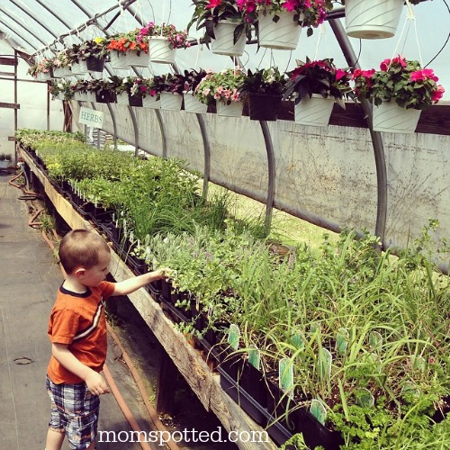 Sawyer flower/vegetable plant shopping in Greenhouse