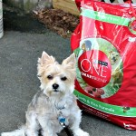 Charlie's Taking the Purina One 28 Day Challenge