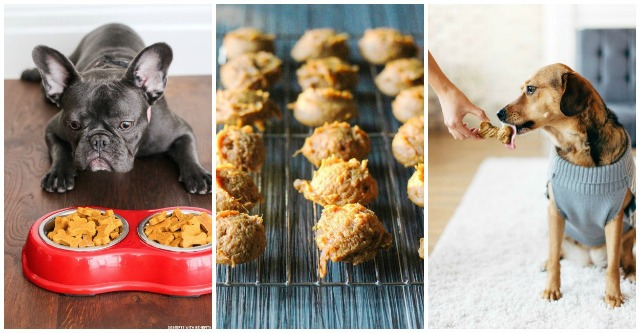 Quick & Easy Homemade Dog Treat Recipes - Mom Spotted