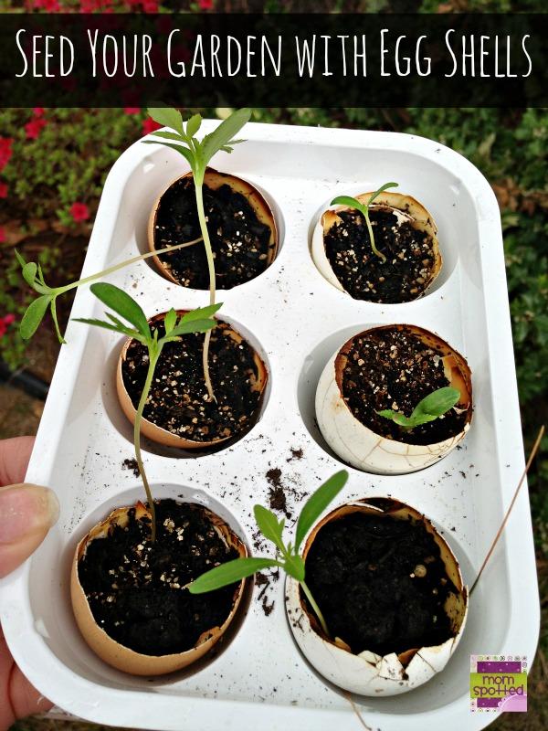seeding for garden in eggshells @momspotted