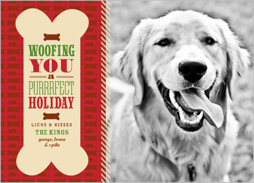 Purrrfect Holiday Christmas Card