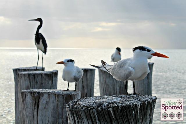 Naples Florida Beach Birds