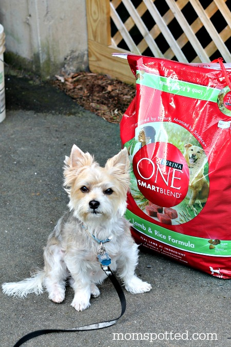 Purina One 28 Day Challenge Charlie